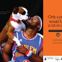 Globetrotting alum contributes to a doggone good cause